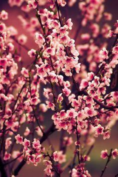 Sakura Acid Wallpaper, Wallpaper Backgrounds, Iphone Wallpaper, Love Flowers, Wild Flowers, Beautiful Flowers, Blossom Trees, Cherry Blossoms, Supreme Wallpaper