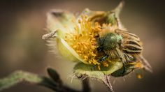nature flowers yellow animals insects bug macro wallbase 1920x1080 wallpaper_wallpaperswa.com_43.jpg (600×337)
