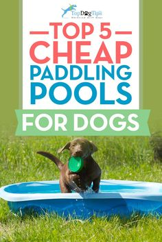 1000 Images About Best Dog Pools On Pinterest Dog Pools