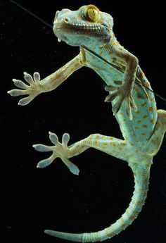 Our friend, the gecko