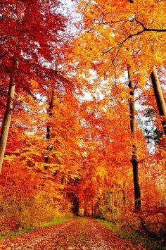 Autumn - such magnificence! Fall Pictures, Fall Photos, Pretty Pictures, Autumn Tale, Autumn Scenes, Seasons Of The Year, Nature Scenes, Autumn Leaves, Scenery