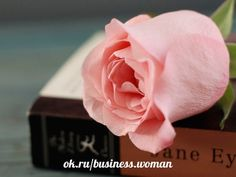 Pink Rose on a Book