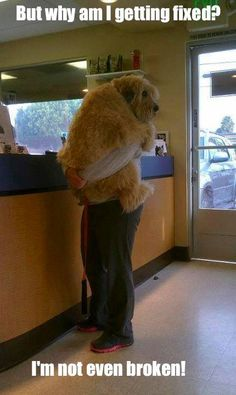 #cute dog #funny dog #dog #cute animals #puppy #puppies #pooch #poochie #doggie # doggy # doggies #dogs #funny dogs #funny puppies #funny puppy
