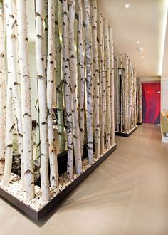 white birch room divider - Google Search