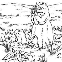 Sur le dessin la maman Marmotte fait le gué alors que les bébés osent à peine mettre la tête dehors.<br /> Colorie les 3marmottes en brun clair, la terre est brun rouge , l'herbe verte et le ciel bleu.<br />