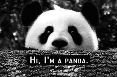 Hi panda .. I'm Megan :)
