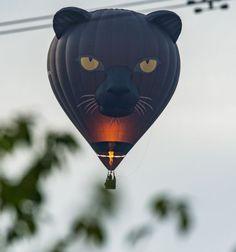 Amusing black cat hot air balloon wows Bristol during mass ascent - Bristol Live One Balloon, Hot Air Balloon, Balloons, City Sky, Bristol, Beast, Shots, Creatures, Scene