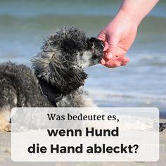 Was bedeutet es, wenn der Hund die Hand ableckt?