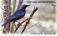Juniper Village at Brookline Wellspring Memory Care: Welcome New Beginnings: January 2015 Events