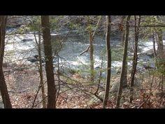 Blackstone River Gorge ~ Tree Friends #BlackstoneRiver #BlackstoneGorge #RollingDam #NatureWalk #Massachusetts