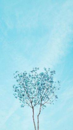 ▷ 1001 + spring wallpaper images for your phone and desktop computer spring background, blue skies, blue blooming tree, phone wallpaper Aesthetic Backgrounds, Aesthetic Iphone Wallpaper, Blue Backgrounds, Aesthetic Wallpapers, Wallpaper Backgrounds, Iphone Backgrounds, Wallpaper Flower, Frühling Wallpaper, Spring Wallpaper