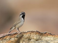 8 Tips For Photographing Birds - Digital Photography School