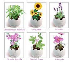 Magic Egg Mini Pet Plant