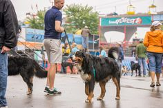 Fromm PetFest @ the Summerfest Grounds in Milwaukee, WI | A free family event hosting a variety of fun pet-focused attractions and activities on Milwaukee's lakefront