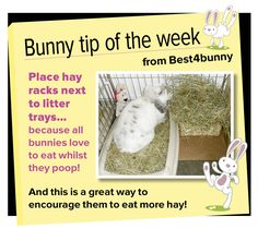 Bunny tip - week 14 Place hay racks next to litter trays to encourage your rabbit to eat more hay.