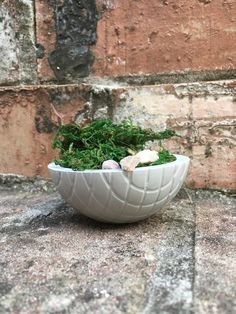 Your place to buy and sell all things handmade Craft Box, Craft Kits, Concrete Bowl, Little Plants, Adult Crafts, Christmas Delivery, Plant Holders, Air Plants, Greenery