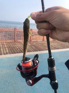 #hengjiafish #fishing skills #hengjialure Soft Lure, Soft Bait, Fishing Lures, Fishing Jig, Bass Fishing Lures