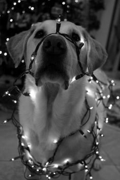 dog + lights = newfangled Christmas tree. Smart, Use black and White so you can keep the lights on and get a clear photo.
