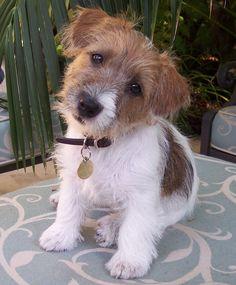 Puppy Crumpet
