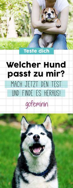 Welcher Hund passt zu mir? Teste dich! #hund #persönlichkeitstest #dog