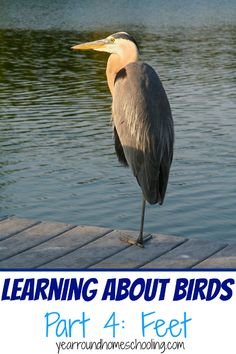 Backyard bird science student stem projects about birds learning learning about birds part 4 feet fandeluxe Images