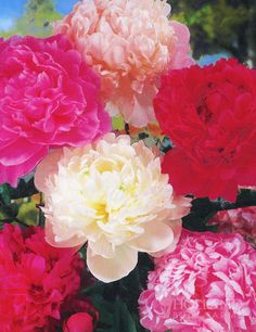 1000 images about teaching alias grace on pinterest for What colour roses can you get