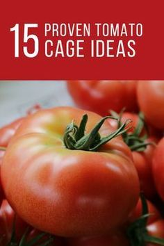 Look at These Space-Saving Ideas On How To Use A Tomato Cage Or Trellis To Make The Most Of Your Space – And Your Harvest… - Alles über den Garten Natural Teething Remedies, Natural Health Remedies, Natural Cures, Herbal Remedies, Yeast Infection During Pregnancy, Tomato Cages, Natural Essential Oils, Herbal Medicine, Trellis