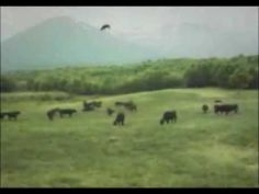 UFO - Cow Abduction - YouTube This is the best thing ever!  I could watch this a hundred times and always laugh. Real or Fake??????