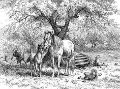 Coloring Pages Animals In Winter : Breaking up winter $24.99 mules farm work country print. almost