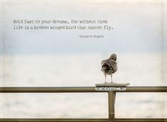 """""""Hold fast to your dreams, for without them life is a broken winged bird that cannot fly.""""  ~ Langston Hughes"""