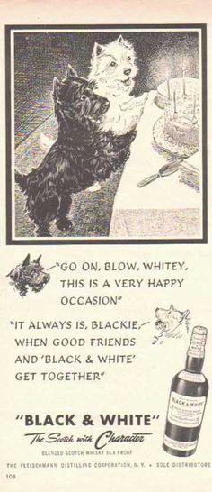 Black & White Scotch Whiskey Scottish Terriers – Birthday Dogs (1949)