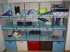 Image result for c & C cage lay out