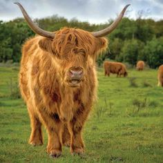 Discover five cattle breeds that make great dual- and triple purpose livestock for your small farm.