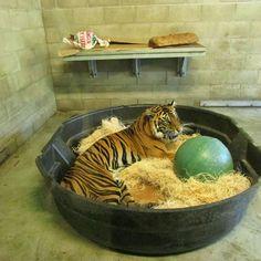 Big tub for big cats!