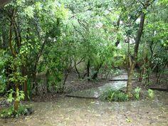 Porque as árvores caem durante o temporal? | Jardim de Helena