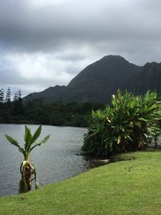 Hoomaluhia Botanical Garden   A Place Of Peace And Tranquility In Oahu |  Only In Hawaii | Pinterest | Oahu, Hawaii And Oahu Hawaii