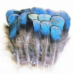 ERGEOB® 100 pièces de cuivre bleu artisanat plumes de poulet d'artisanat plume plumes de faisan plumes cheveux 4-8cm / Longueur
