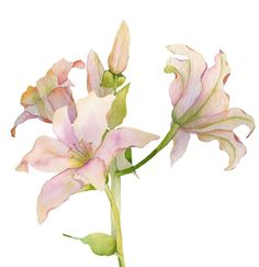 The lilies are blooming like crazy and we have finally had rain so wonderful!