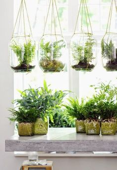 Best Indoor Gardens Winter getting you down? Plant an indoor garden and instantly feel betterWinter getting you down? Plant an indoor garden and instantly feel better Hanging Air Plants, Diy Hanging Planter, Diy Planters, Indoor Plants, Planter Ideas, Terrarium Ideas, Hanging Ferns, Indoor Ferns, Potted Ferns