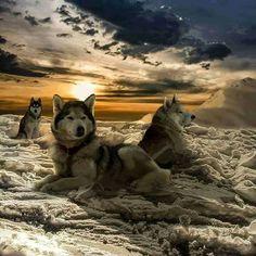 KURT & WOLF