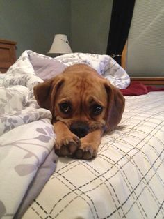 The cutest things on the internet!