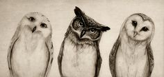 The Owl's 3 Art Print - for the hardin kitchen? :) @Rachel Eubanks @Catie Stewart