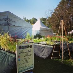 """""""We have lots of beautiful plants at the Open Gardens Plant Fair at Lanyon Historic Homestead. #perennialle #perennialleplants #Canowindra…"""""""
