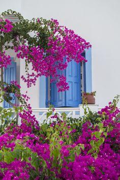 .Windows & flowers, Oia, Santorini <3°°