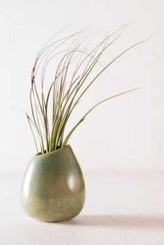Hinterland Trading Air Plant Jucifolia in Stone Green Round Ceramic Vase Gift Boxed. This wondrous air plant Jucifolia will brighten your home or office. Air plant Jucifolia nestled in our handmade from Guatemala Ceramic vase. This interesting plant comes gift boxed and ready for you to add a special message. Easy care instructions included.