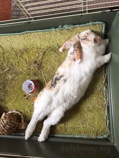 Bunny naps stretched waaay out - July 2, 2015