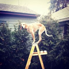 """Maddie On Things"" by Theron Humphrey #dogs #physics"