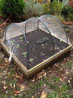 Bird Netting, Garden Netting, Spiral Garden, Sun Garden, Covered Garden, Vegetable Garden Design, Garden Structures, Plantation, Raised Garden Beds