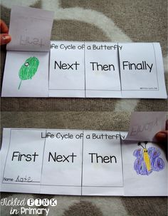 Life Cycle of a Butterfly sequencing                              …