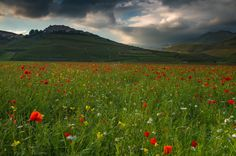 United Colors (and Light) of Castelluccio Grande, The Unit, Mountains, Landscape, Nature, Pictures, Travel, Color, Photos